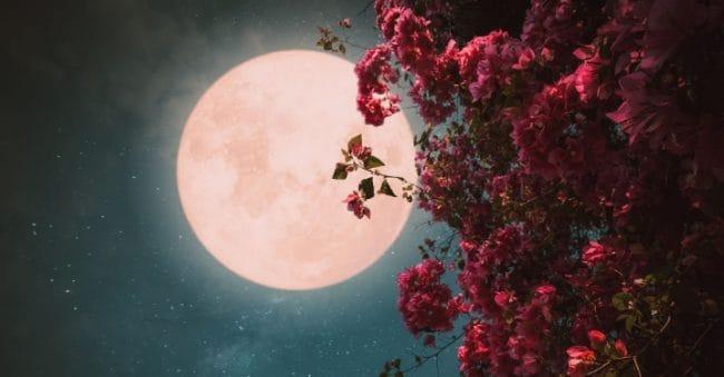 6 Fakta Menarik Pink Moon, Bulan Purnama Terbesar Hingga Bulan Paskah