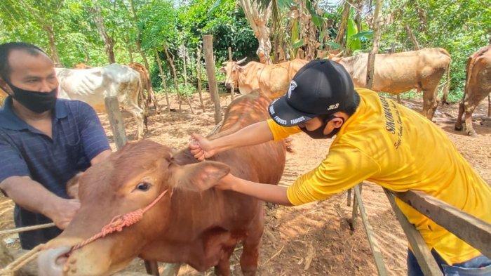 Dorong Swasembada Daging 2026, Pemkab Bantul Rilis Inseminasi Sikomandan