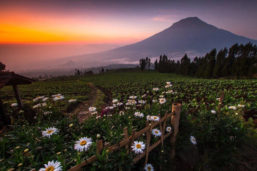 Eksotisme Wisata Alam Posong, Keindahan Di Antara Gunung Sindoro-Sumbing