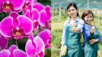 Lakukan 9 Cara Ini Agar Bunga Anggrek Tumbuh Subur dan Indah