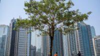 Pergub Terbit, DKI Targetkan Tanam 200 Ribu Pohon hingga 2022