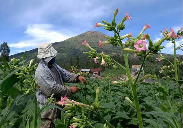 Kelompok Margo Mulyo Kulon Progo Tetap Produksi Kopi Menoreh
