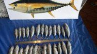 Mengenal Jenis Ikan Tuna di Dunia Serta Manfaatnya | Beritaenam.com