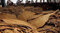 Sumbangan ke Negara Besar, Waketum MPR Setuju Buat Peta Jalan Industri Hasil Tembakau