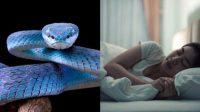 15 Arti Mimpi Digigit Ular, Pertanda Sakit Hingga Pasangan Selingkuh