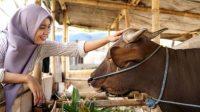 Jelang Idul Adha, Sudah Tahu Hukum Berkurban dan 6 Syarat Hewan Kurban?