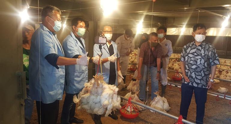 Kembangkan Peternakan Modern, Sukabumi Panen 40 Ribu Ayam