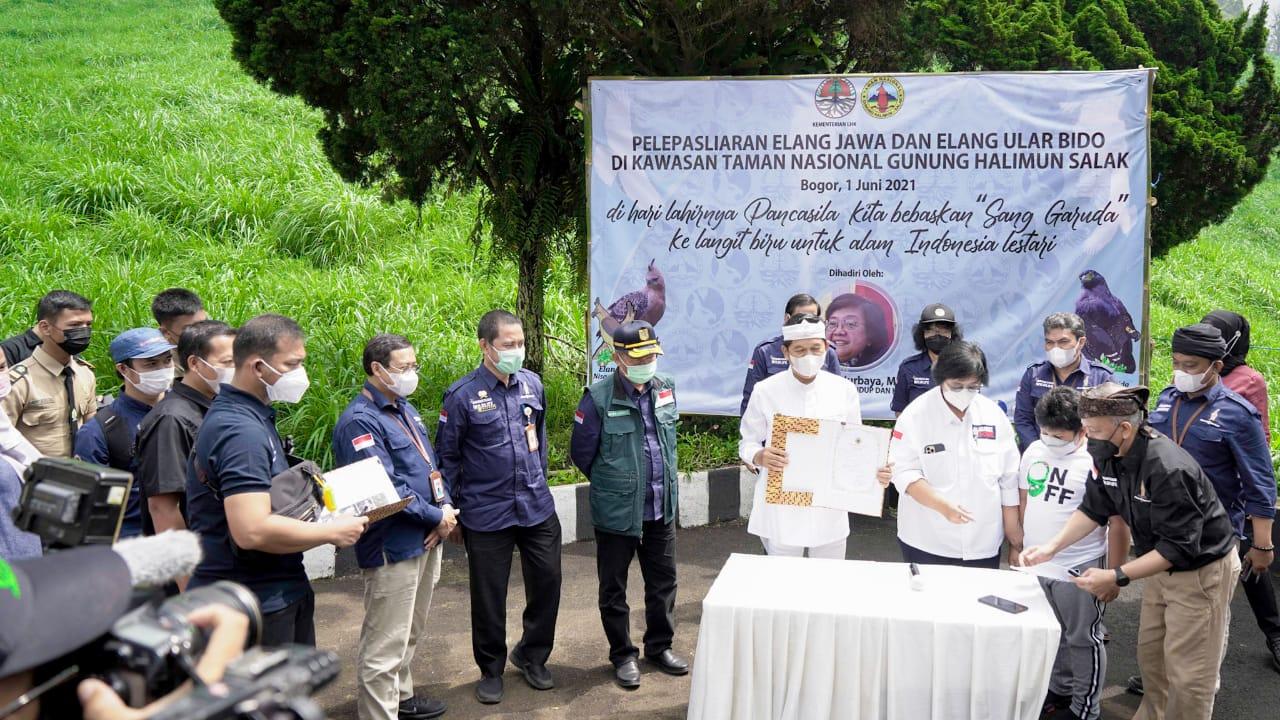 Menteri LHK Lepasliarkan Elang Jawa di Hari Lahir Pancasila