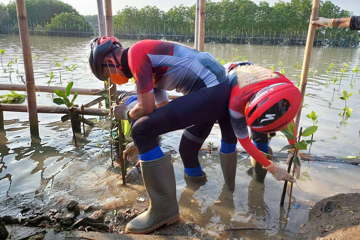 Tanggal lahir bung Karno, Ganjar tanam mangrove di area land subsidence