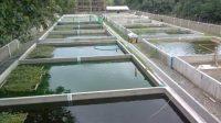 Trenggono Tawarkan Budi Daya Ikan Air Tenang Petani Danau Maninjau